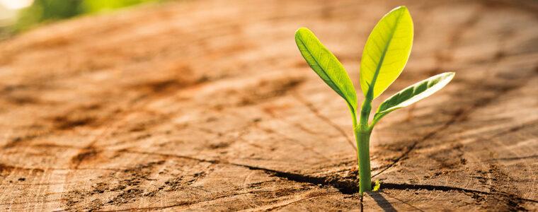 Jak przygotować drewniane powierzchnie na wiosnę?